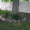 hostas around tree beside pnd<br /> <br /> Photographer's Name:  <br /> Photographers City and Country: ,
