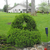 shrub shapped as a basket<br /> <br /> Photographer's Name: Angie Godby<br /> Photographer's City and State: Sharpsville, IN