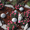 fairy garden<br /> <br /> Photographer's Name:  <br /> Photographers City and Country: ,