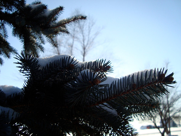 #holidaycard<br /> <br /> Photographer's Name: Jessica Rogers<br /> Photographer's City and State: Kokomo, IN
