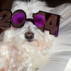 Every dog has its day..or at least New Year's Eve..<br /> <br /> Photographer's Name: Kim Dunlap<br /> Photographer's City and State: Kokomo, IN
