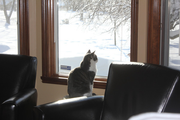 Our cat, Doodles, looking out window at the deep snow<br /> <br /> Photographer's Name: Theresa Lindley<br /> Photographer's City and State: Kokomo, IN