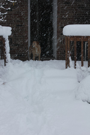 Our dog, Sky, contemplating how to go out with all the snow!<br /> <br /> Photographer's Name: Theresa Lindley<br /> Photographer's City and State: Kokomo, IN