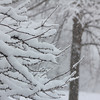 January 2014 winter storm - snow on trees and snow fall<br /> <br /> Photographer's Name: Theresa Lindley<br /> Photographer's City and State: Kokomo, IN