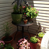 patio garden<br /> <br /> Photographer's Name: Kelly Rush<br /> Photographer's City and State: kokomo, IN