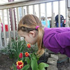 Kaelin enjoying the newly blooming flowers.<br /> <br /> Photographer's Name: Joanne Main<br /> Photographer's City and State: Kokomo, IN