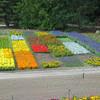 Burchardt Gardens<br /> <br /> Photographer's Name: Bill Dague<br /> Photographer's City and State: kokomo, IN