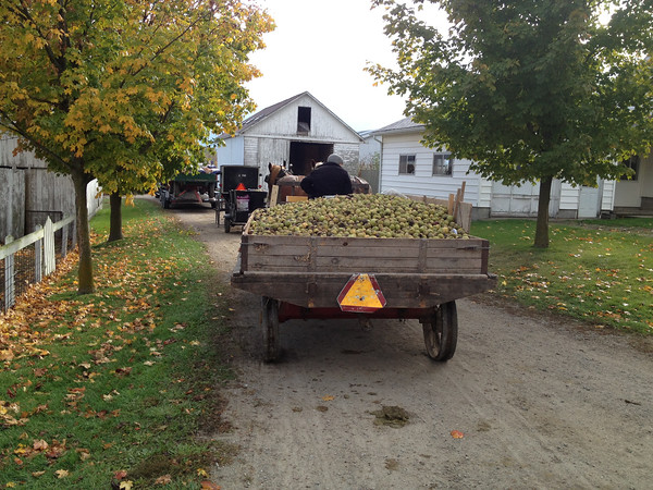 During a country drive north, we passed a farm which peeled and cracked black walnuts before sending them to a processing plant.<br /> <br /> Photographer's Name: Roberta Hite<br /> Photographer's City and State: Kokomo, IN
