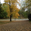 Beautiful fall foliage!<br /> <br /> Photographer's Name: Roberta Hite<br /> Photographer's City and State: Kokomo, IN