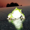 A tree frog. Photo submitted by B. Miller
