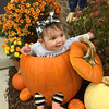 Granddaughter Vivian's first Halloween<br /> <br /> Photographer's Name: Lisa Finch<br /> Photographer's City and State: Russiaville, IN