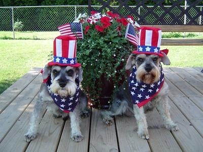 #contest  Lucky and Chance Fourth of July  Photographer's Name: Kelly Cook Photographer's City and State: Greentown, IN