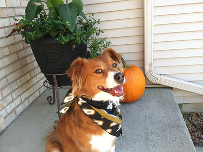 """Scoobies says """"Boiler UP""""  Photographer's Name: Tracy Matus Photographer's City and State: Crown Point, IN"""