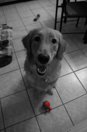 Sasha and her toy<br /> <br /> Photographer's Name: Stephanie Wray<br /> Photographer's City and State: Kokomo, IN