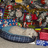 Cassidy1st Christmas in Her<br /> <br /> Photographer's Name:  <br /> Photographers City and Country: ,