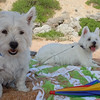 Cayliebug and Chloe the Westie Beach bums<br /> <br /> Photographer's Name: TEDD SCHROEDER<br /> Photographer's City and State: Kokomo, IN