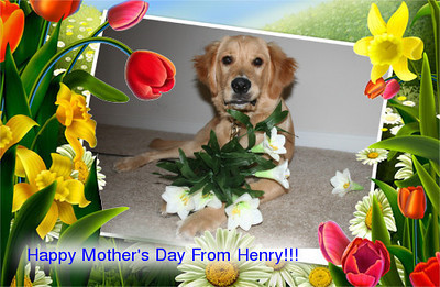 Henry's Mother's Day Card to his furry Mommy!<br /> <br /> Photographer's Name: Jennifer Ross<br /> Photographer's City and State: Fishers, IN