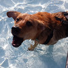 Dog Days at Kokomo Beach!<br /> <br /> Photographer's Name: Alicia Abney<br /> Photographer's City and State: Kokomo, IN