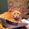 Charlie the cat reads the Pharos-Tribune.<br /> <br /> Photographer's Name: Debby Hastings<br /> Photographer's City and State: Logansport, IN