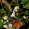 Butterfly on the River Bluff Trail, Logansport, Indiana<br /> <br /> Photographer's Name: Diane Murphy<br /> Photographer's City and State: Logansport, IN