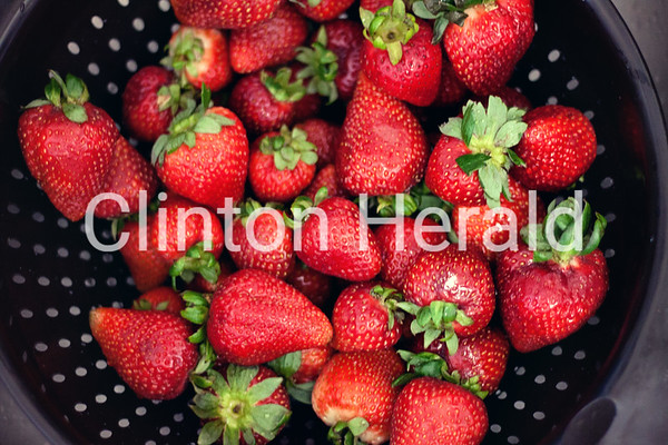 Strawberry Overload<br /> <br /> Photographer's Name: Juliana Sabo<br /> Photographer's City and State: Clinton, IA