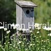 Backyard Birdhouse<br /> <br /> Photographer's Name: Lori Callahan<br /> Photographer's City and State: Clinton, IA