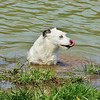 Dolly the Jack Russell checking out her pond.<br /> <br /> Photographer's Name: Sharon Markle<br /> Photographer's City and State: Markleville, Ind.