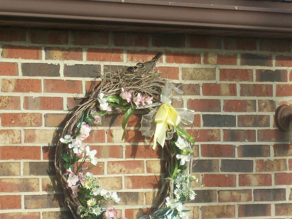 Robin nesting in our spring flowered wreath out front of our house.<br /> <br /> Photographer's Name: Karen McCord<br /> Photographer's City and State: Frankton, IN