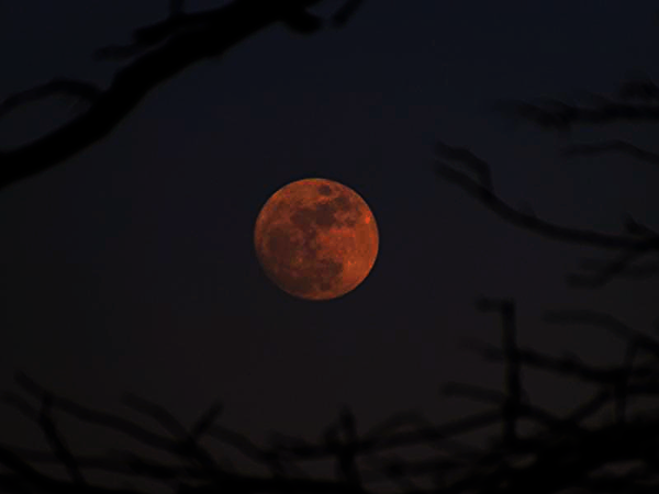 Full pink moon of April, taken at my farm in Richland Township.<br /> <br /> Photographer's Name: J.R. Rosencrans<br /> Photographer's City and State: Alexandria, Ind.