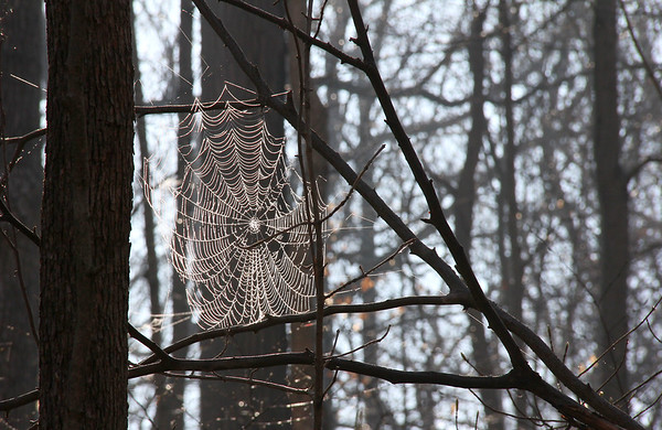 The recent heavy fog moisture was captured by many spider webs at Mounds Park.<br /> <br /> Photographer's Name: Jerry Byard<br /> Photographer's City and State: Anderson, Ind.