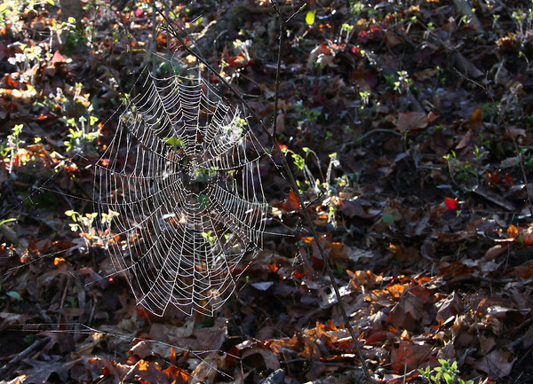 The woods at Mounds Park had many spider webs that were moisture covered from the early morning fog.<br /> <br /> Photographer's Name: Jerry Byard<br /> Photographer's City and State: Anderson, Ind.