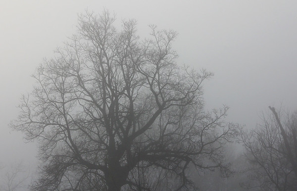 The fog this morning gave an ethereal look to all roads and neighborhoods.<br /> <br /> Photographer's Name: Jerry Byard<br /> Photographer's City and State: Anderson, Ind.