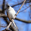 A tufted titmouse has his tuft ruffled by the wind at Mounds Park.<br /> <br /> Photographer's Name: Jerry Byard<br /> Photographer's City and State: Anderson, Ind.