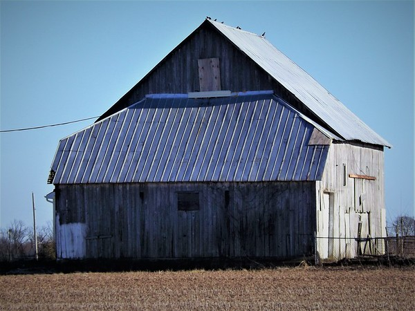 Madison County barns.<br /> <br /> Photographer's Name: J.R. Rosencrans<br /> Photographer's City and State: Alexandria, Ind.