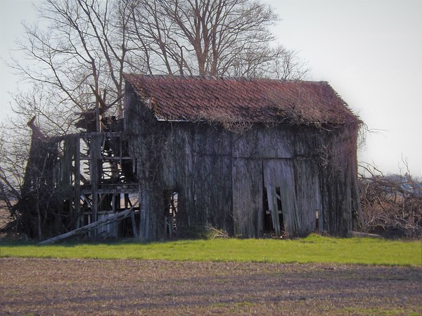Ghost barn in Madison County.<br /> <br /> Photographer's Name: J.R. Rosencrans<br /> Photographer's City and State: Alexandria, Ind.