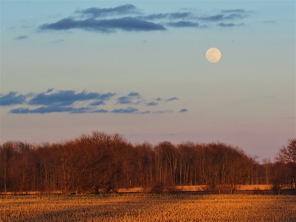 A late March moon, watching a golden sunset, on a field in MadCo. <br /> <br /> Photographer's Name: Harry Van Noy<br /> Photographer's City and State: Lafayette Township, Ind.