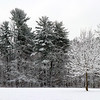 A lone flocked snow covered tree at Mounds Park.<br /> <br /> Photographer's Name: Jerry Byard<br /> Photographer's City and State: Anderson, Ind.
