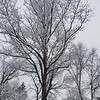 April 2, 2018...That same tree!<br /> <br /> Photographer's Name: Jack D. Reynolds<br /> Photographer's City and State: Anderson, Ind.