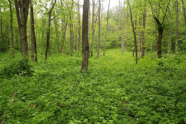 You can't see it but this is the trail up to Doty Cemetery in Fortville. It's beautiful in the spring!<br /> <br /> Photographer's Name: Colleen Sanders-Brown<br /> Photographer's City and State: Anderson, Ind.