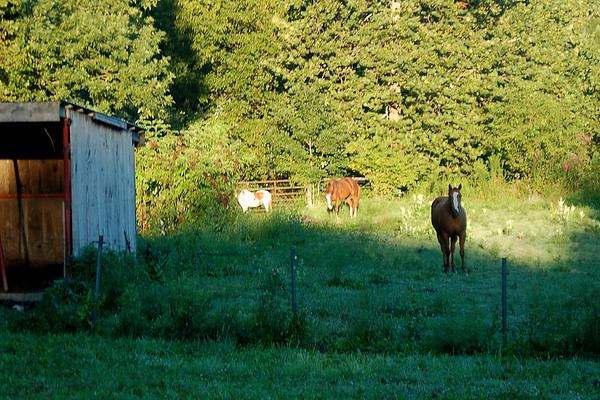 Early morning grazing.<br /> <br /> Photographer's Name: Amber Ryder<br /> Photographer's City and State: Daleville, Ind.