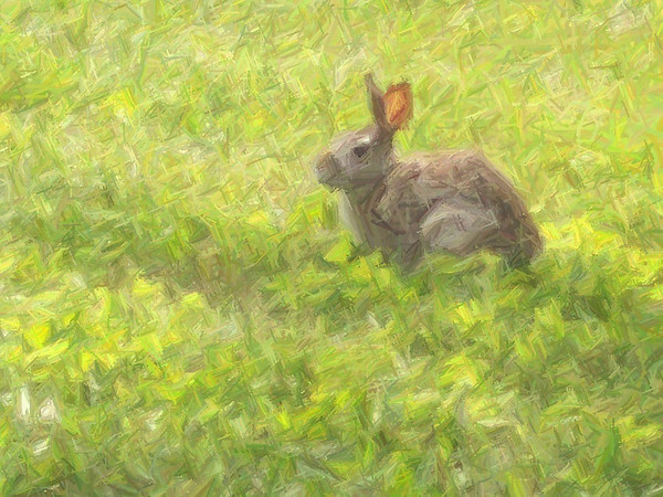 Chalkfilter used on rabbit photo<br /> <br /> Photographer's Name: Michelle Estelle<br /> Photographer's City and State: Marion, IN