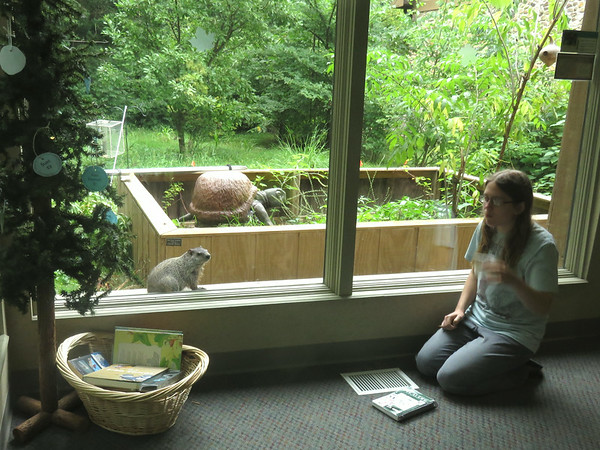 A girl, a groundhog, and a giant tortoise sculpture at the Mounds Park nature viewing room. <br /> <br /> Photographer's Name: Pete Domery<br /> Photographer's City and State: Markleville, Ind.