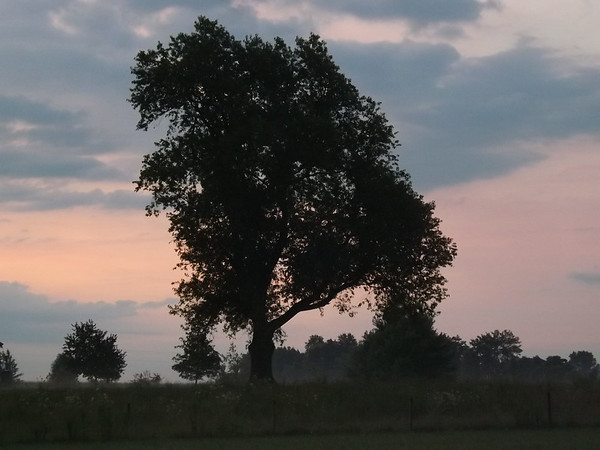 The mighty oak at my farm in Richland Township.<br /> <br /> Photographer's Name: J.R. Rosencrans<br /> Photographer's City and State: Alexandria, Ind.