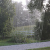 Morning Spider webs at the farm.<br /> <br /> Photographer's Name: J.R.  Rosencrans<br /> Photographer's City and State: Alexandria, Ind.