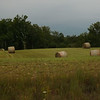 Newly mowed hay at my farm in Richland Township.<br /> <br /> Photographer's Name: J.R. Rosencrans<br /> Photographer's City and State: Alexandria, Ind.