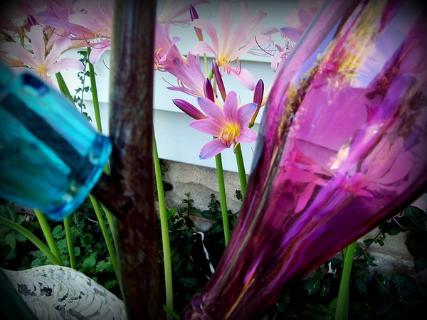 Naked ladies peeking through the bottle tree.<br /> <br /> Photographer's Name: Debra Howell<br /> Photographer's City and State: Pendleton, Ind.