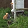 The cats are curious about a new batch of bees! <br /> <br /> Photographer's Name: Mick Coryell<br /> Photographer's City and State: Anderson, Ind.