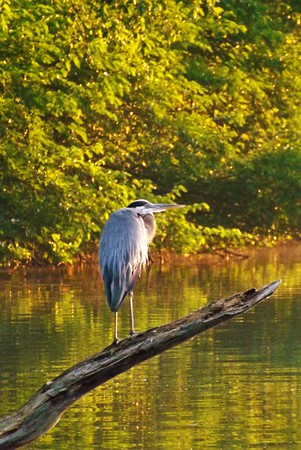 Fishing partner at Shadyside Lake.<br /> <br /> Photographer's Name: J. R. Rosencrans<br /> Photographer's City and State: Alexandria, Ind.