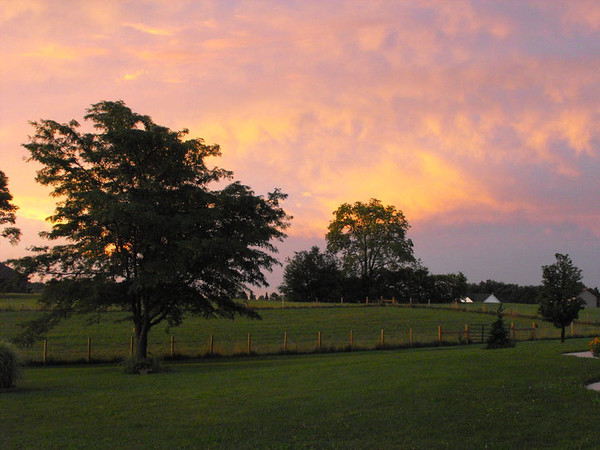 Morning glory on the farm in Richland Township.<br /> <br /> Photographer's Name: J. R. Rosencrans<br /> Photographer's City and State: Alexandria, Ind.