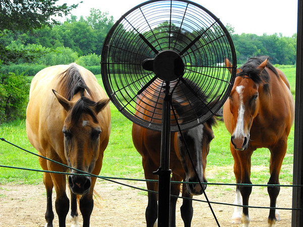 """The """"Fan Club:"""" My barn in Richland Township.<br /> <br /> Photographer's Name: J. R. Rosencrans<br /> Photographer's City and State: Alexandria, Ind."""